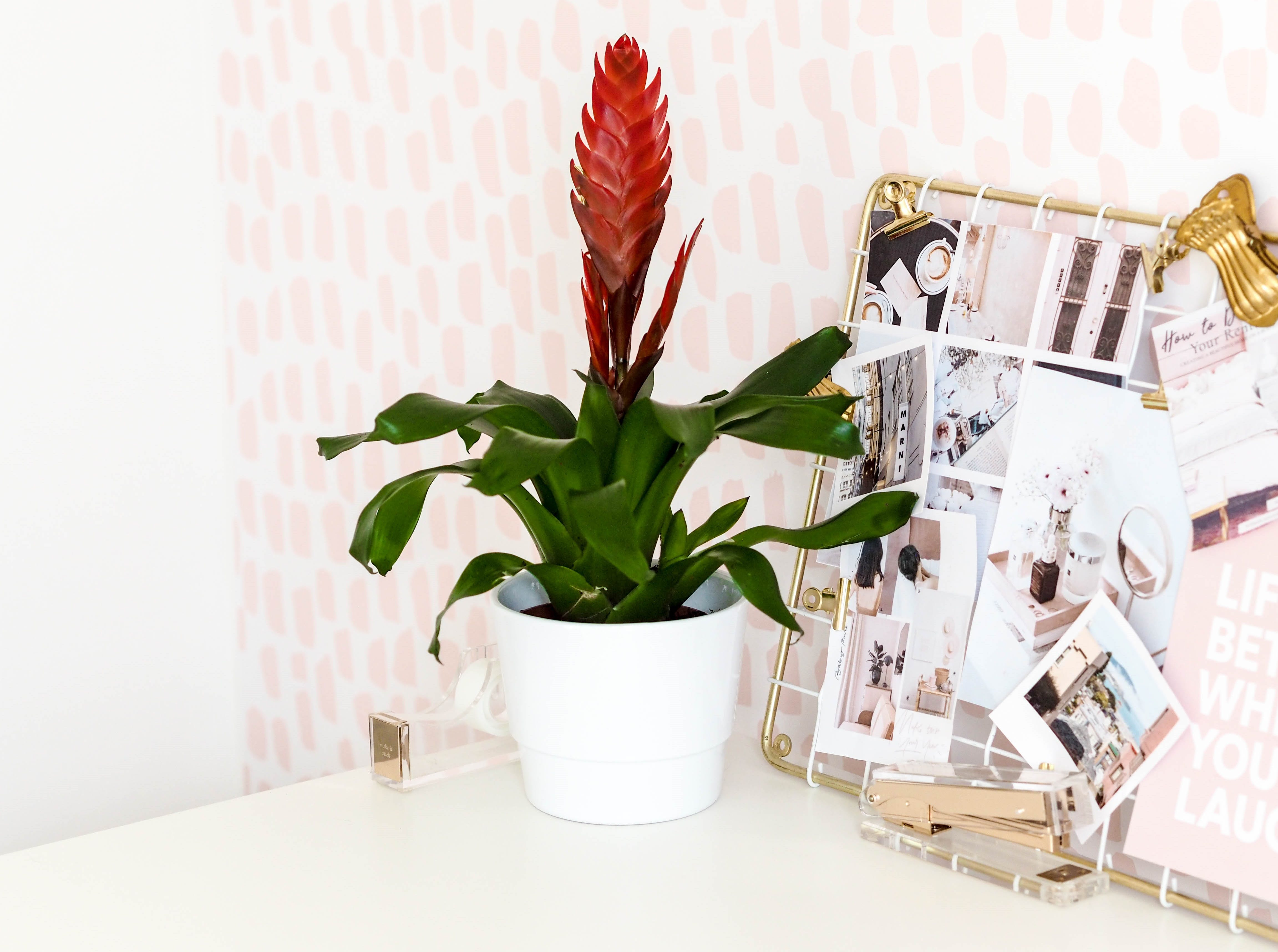 Lazy Flora Indoor Plant Subscription