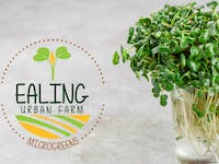 Microgreens Box by Ealing Urban Farm