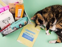 Gus & Bella – Cat Subscription Box